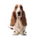 Hush Puppies – Aman Central